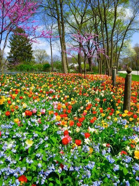 A Beautiful Geneva Garden on a Beautiful Spring Friday