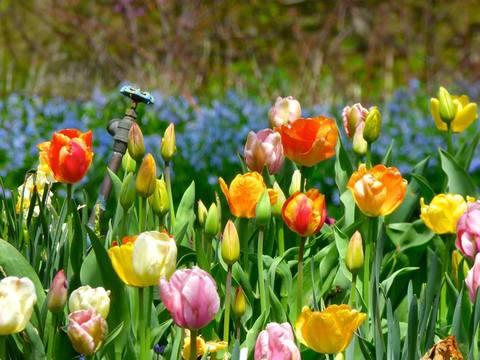 A Geneva Garden...April 22, 2016