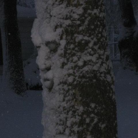 Tree face coming alive