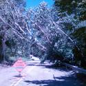 Down Tree On Powerlines On West Road In Marlborough