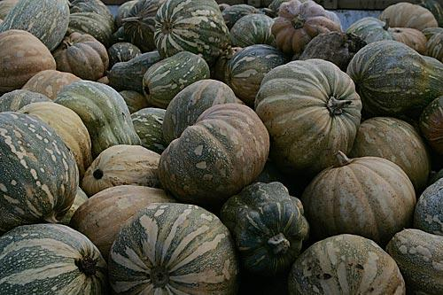 "<a href=""http://www.latimes.com/features/food/la-fo-winter-squash-s,0,314178.story"" target=""_blank""><b>What's hitting its peak in October?</b> Winter squash. Cutting into a squash can be half the challenge -- some varieties have skins so tough they seemingly require a hammer and chisel. But your diligence will be rewarded. Click here for details.</a>"