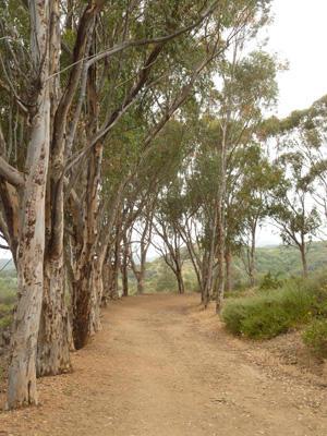 Will Rogers Trail