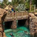 SeaWorld Discovery Cove Grand Reef opening day