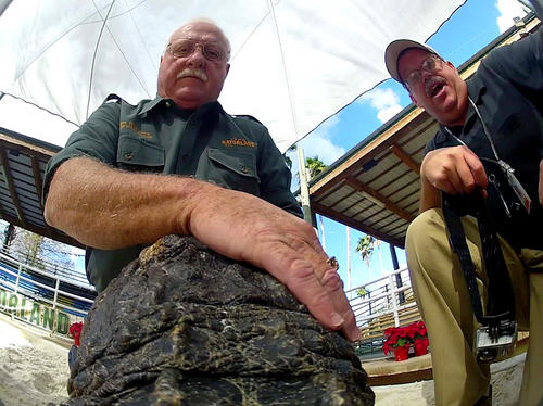 Orlando Sentinel photographer Joe Burbank (right) works with renowned alligator expert Tim Williams and his team to make sure all systems are go for the camera attached to 'Mona' in the first-ever GatorCam, at Gatorland, in Orlando, Fla.,,  Wednesday, Dec. 14,  2011.