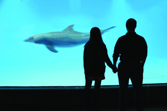 Aww, Date Night at the National Aquarium.