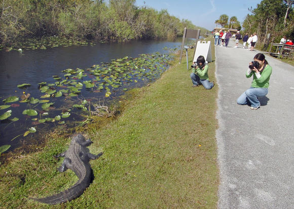 Travel to the Florida Everglades