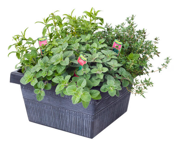 Herbs Grow Them In A Bonnie Plants Combo Planter Or In