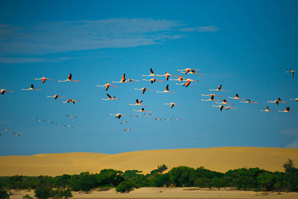 Flamingos in Mozambique