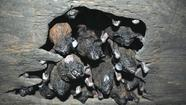 Bats are dying from white-nose syndrome