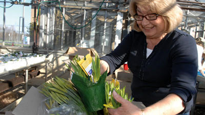 Rose Shaffer of Berlin is seen Thursday filling a box with Shar N. Hope bears and daffodils for delivery. Approximately 50 packers and deliverers volunteered to help the American Cancer Society.