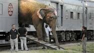 Debate erupts over elephant training as circus comes to town