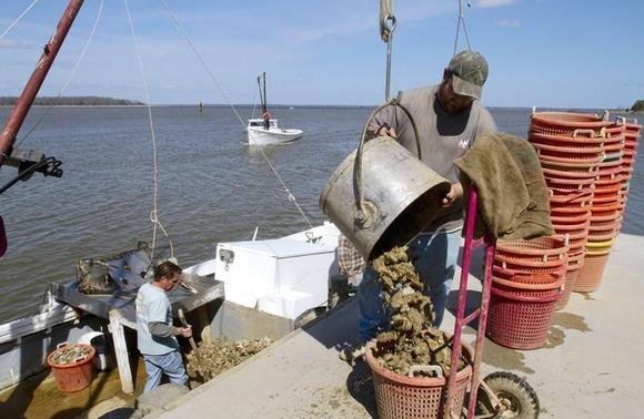 Jared Cope of Melzer's unloads this bushel of oysters into one of the baskets from the Bunny Hop boat with Steve Carter and Chet McPherson.