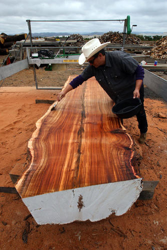 By Mary MacVean<br /> At Woodhill Firewood in Irvine, John Dominguez stands by a cross-section of a trunk to be saved and used, instead of being chipped into mulch or sent to a landfill. Dominguez is director of a 2-month-old partnership between West Coast Arborists and Woodhill Firewood, an operation that takes in 600 tons of wood a day from tree trimming and removal jobs.