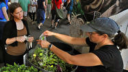 From stall to store, Farmers' Market vendors turn seasonal sales into year-round businesses