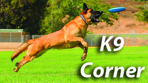 K-9 Corner: Warm weather brings back bugs