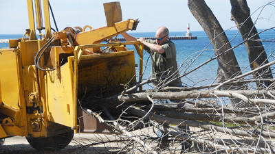 Chad Williams, of Stuckman Tree Service in Gaylord, controls a tree being fed into a wood chopper at Petoskey's waterfront, Monday. The city of Petoskey has contracted the service to remove more than 50 ash trees, infected with the emerald ash borer, from city parks.