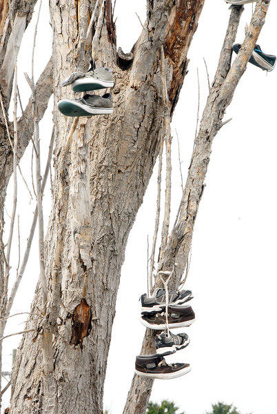 Shoes hang from a tree along Cemetery Road in Petoskey, as seen here Tuesday.
