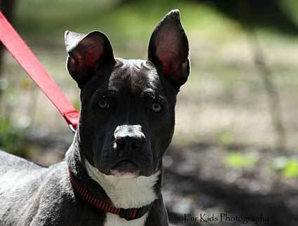 "Formerly homeless dog Sophia stars as ""Man's Best Friend"" in Macbeth on April 12."