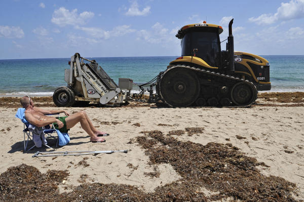 "James Marsh sunbathes on Fort Lauderdale beach as a tractor rakes up washed up seaweed.  Crews have picked up more than 40 tons so far.  ""It doesn't look good in the Facebook photos I posted, but it's still a beautiful day,"" Marsh said."