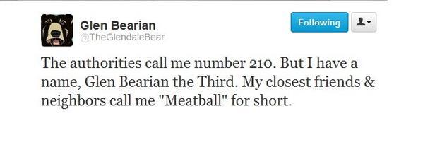 The Glendale bear, 'Glen Bearian,' tweets from his Twitter account @TheGlendaleBear.