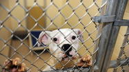 Baltimore's neediest animal shelter could win big bucks -- if you vote