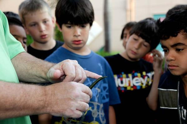 Kids Ecology Corps' Eco-action Learning Director, Lee Gottlieb, explains how the mangrove propagules leaves grow to fourth grade students in S.O.L.A.R. Club at Embassy Creek Elementary School located in Cooper City. Kids Ecology Corps is a nonprofit organization that provides eco-action community service programs for children and adults. For more information, visit www.KidsEcologyCorps.org.
