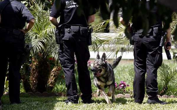 Yudi the Glendale Police Department K-9 dog looks for burglary suspects on Blossom Street near Paula Avenue in Glendale.