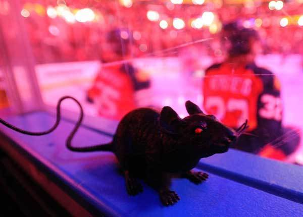 A plastic rat sits on the boards before the playoff game against the New Jersey Devils. New Jersey Devils vs. Florida Panthers Round 1 NHL Playoffs. BankAtlantic Center, Sunrise, Florida.