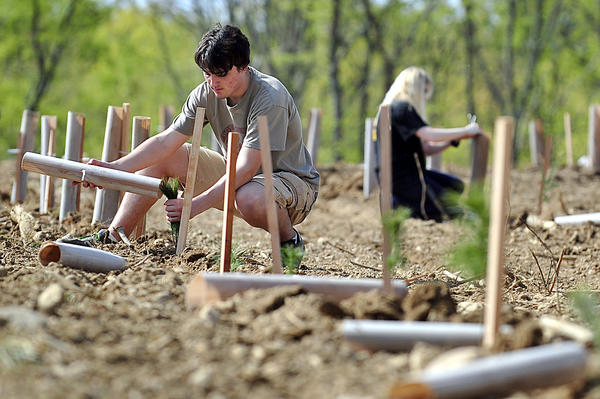 Boy Scout Troop 4 member, Chris Meuse, 15, of Huyett puts a protective covering on one of 1,600 trees planted with the help of Funkstown Boy Scout Troop 23 and Williamsport troop 4, Saturday at the Potomac Fish and Game club in Williamsport.