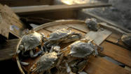 Steamed crabs, cream of crab soup, crab cakes, crab imperial, soft shell crab, deviled crab, corn and crab chowder, crab bisque, crab dip, crab salad, crab fritters, crab ravioli, crab pie, crab quiche — but that's probably enough for the first day.