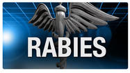 A calf is the most recent animal to test positive for rabies in Pittsylvania County.