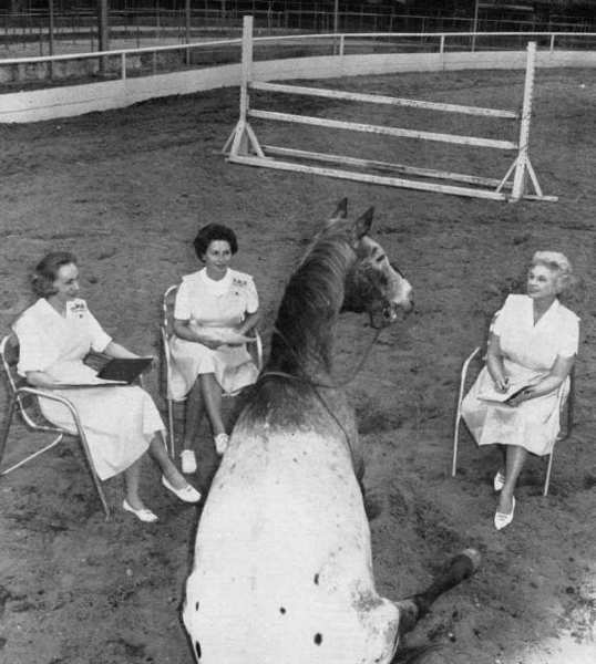 Dear John, a horse belonging to character actor Slim Pickens, was featured in a Valley Sun cover photo with members of the Flintridge La Canada Guild of Huntington Hospital in advance of the 41st annual Childrens Horse Show at the Flintridge Riding Club.