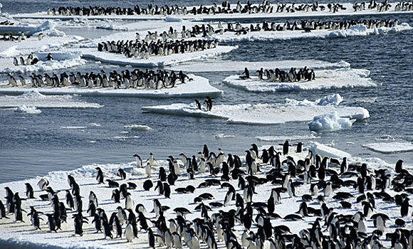 "Penguins swarm ice floes in the Antarctic in a scene from ""Frozen Planet."""