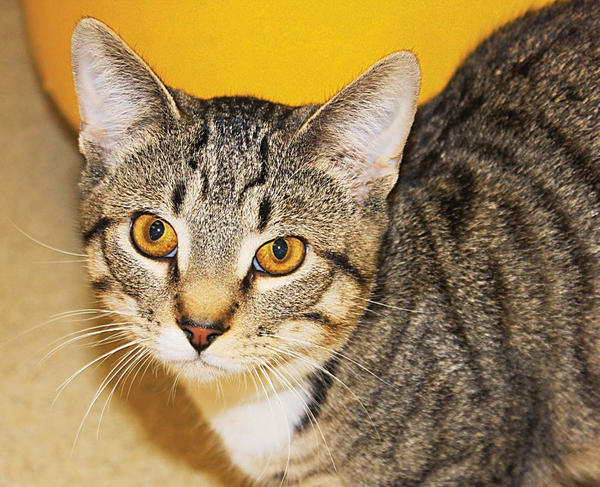 Indiana, and his brother Kansas, are available for adoption from the Humane Society of Washington County.