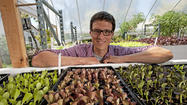 Market Watch: In Mar Vista, an aquaponics farm just down the street