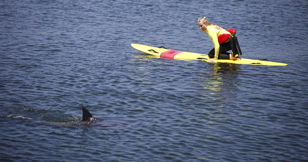 A lifeguard floats next to a wayward dolphin in the Bolsa Chica wetlands in Huntington Beach.