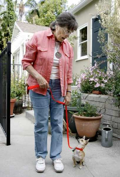 Judy Springborn works with Apple Pie, a Chihuahua mix, at her Glendale home. Springborn is hearing-impaired and the small dog assists her with daily activities around the home.