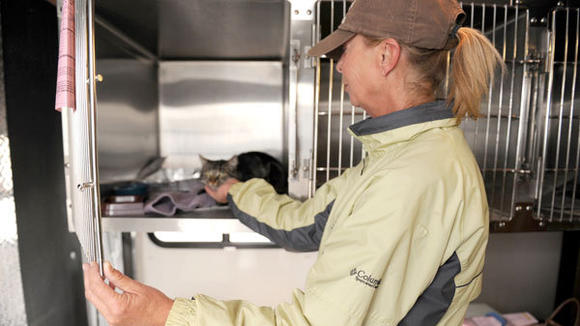 The clinic at Wags to Wiskers put on by Friends for Life saw 34 cats be sterilized.