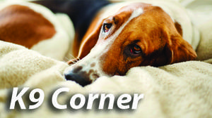 K9 CORNER: Treat your dog to a massage