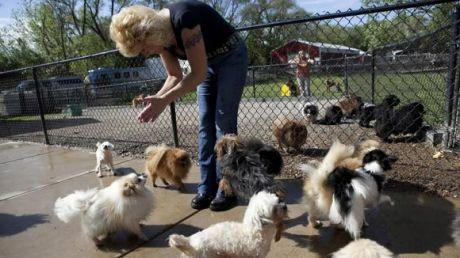 Dawn Hamill at the Painted Pastures Animal Rescue and Sanctuary near Tinley Park on April 29, 2010. (Tribune file photo)