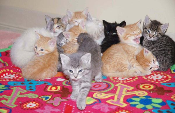 A pile of kittens huddle together at the Little Traverse Bay Humane Society in Harbor Springs. These kittens were a handful of 46 total kittens relinquished to the humane society from a single household. The organization is now looking to raise $3,000 to cover just the kittens' medical expenses, which doesn't include their food and litter.