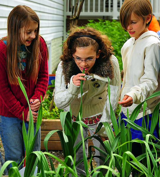 Sadie Levering, left, Roula Hammer and Helena Bridwell check the progress of plants they are growing at Morgan Academy.