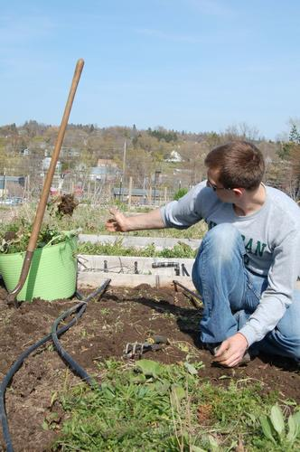 Kenny Rogers of Petoskey tosses a clump of weeds into a tote. This is his first year gardening a plot at the Petoskey community garden.
