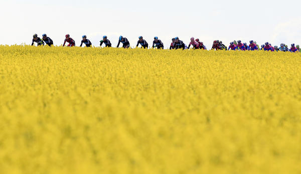 The pack rides on May 7, 2012 during the third stage of the Giro d'Italia around Horsens, Denmark.