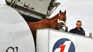 Kentucky Derby champ I'll Have Another gets warm welcome at Pimlico