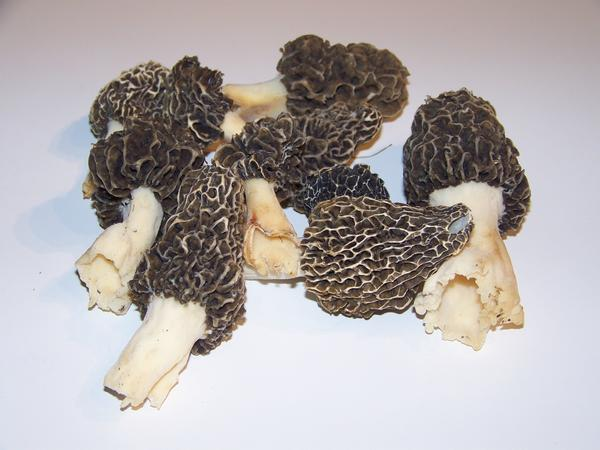 Tony Williams of Boyne City, known as the morel expert, offers some tips for those who plan on cooking up morels.