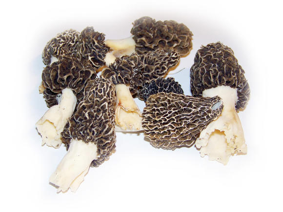 Talking morels