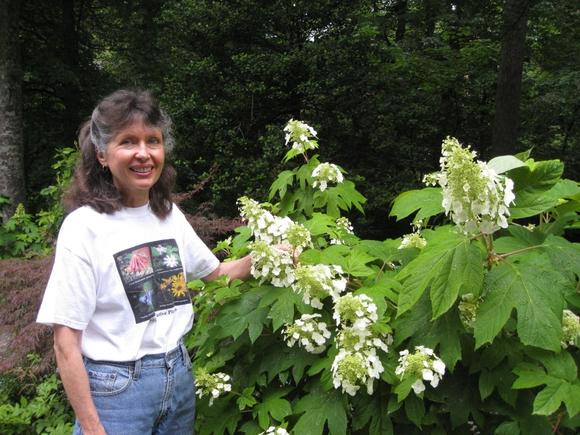 Mary Turnbull and her native plants, including this oakleaf hydrangea, are part of a native plant program May 26.