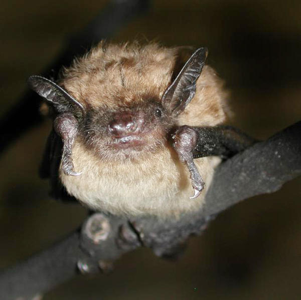 Public health officials are reminding residents and visitors to reduce their exposure to rabies by avoiding contact with wild animals, especially bats.