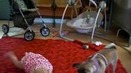 Dog helps baby learn to crawl